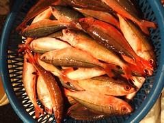 國內糧食總產出平均年變動率為-1.6%,其中減產幅度較大者為漁場受限並資源枯竭之水產類。