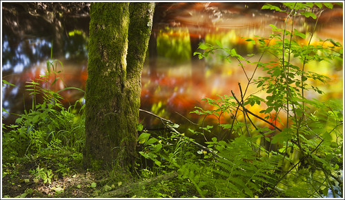 20120618. Pärnumaa. Laiksaare. Rannametsa river. 2970. 1. by Tiina Gill