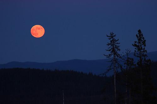 moon tree oregon canon bend hills xsi mtbachelor pinkmoon centurydrive tamron70300mmvcusd