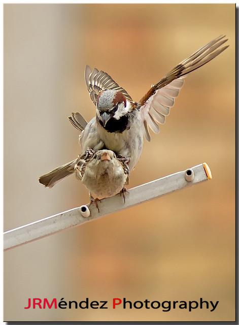 Wildlife .....