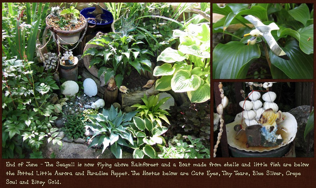 Mini Water Garden 4