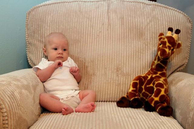 M vs Giraffe Week 8