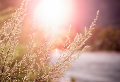 light sunset summer sky sun plant nature water grass photoshop canon project lens eos rebel 50mm prime austria europe dof sundown bokeh f14 meadow days adobe flare 365 dslr lightroom 550d t2i itslegitx