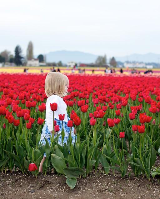 tulips 10
