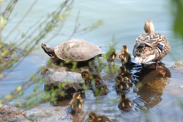mall turtle_0092