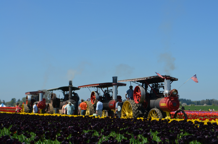 four_traction_machines_tulip_fields