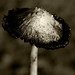 Dirty Old Mushroom