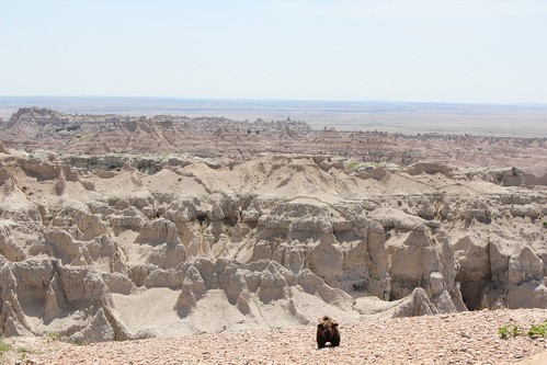 Buddy in the Badlands