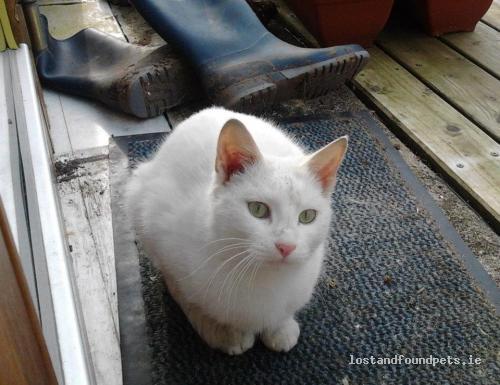 [Reunited] Thu, May 31st, 2012 Lost Female Cat - Castlebar, Ballintubber,, Mayo