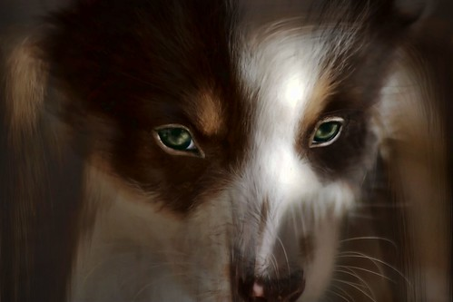 Green-Eyed Puppy