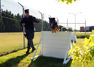 Master-at-Arms 2nd Class Shane McClennen leads Mink, a military working dog.