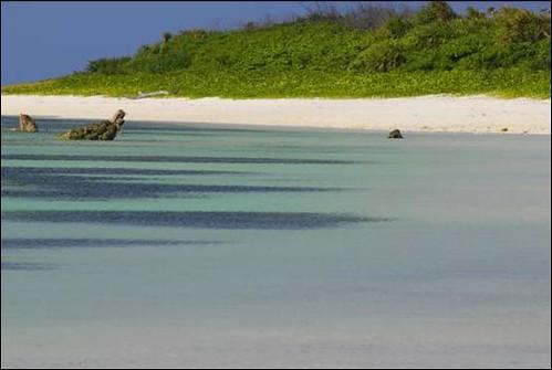 東沙島擁有廣大以及未受人為干擾的沙灘是海龜最佳的產卵地。(圖片來源:海洋國家公園管理處)