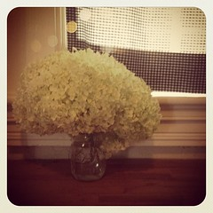 Hello hydrangeas! #flowers