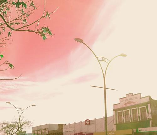 Te Awamutu Street with tree.jpg by easegill