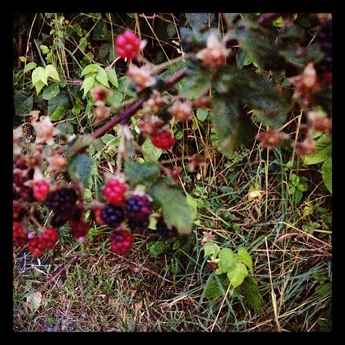 Wild berries are the sweetest by Quilter Bear