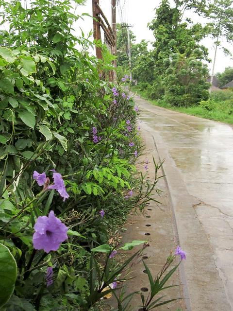 Rainy walk 2