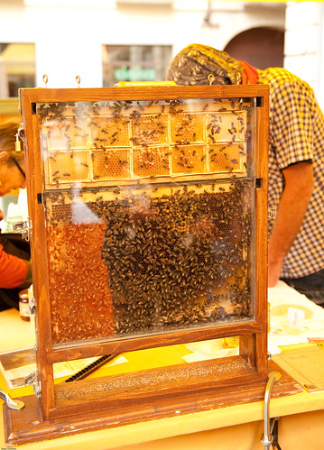 Bees in the Market