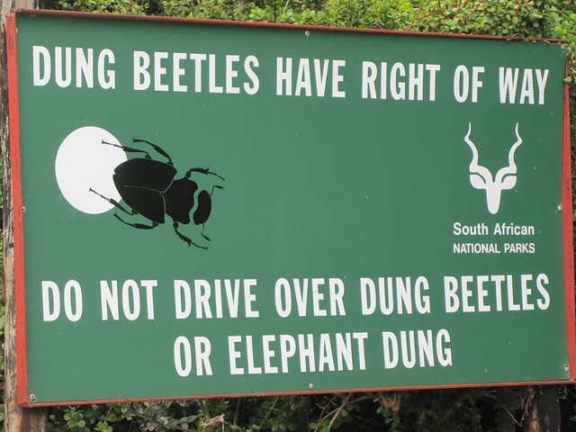 Dung Beetle Have Right of Way sign