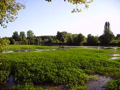 Rivage de la rivière Isle