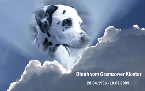 Dinah 3 Jahre im Himmel by Dalmatiner vom Hossenhaus