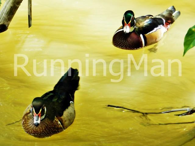 Jurong Bird Park 08