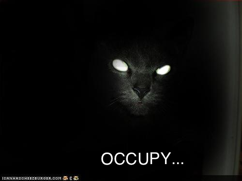 OCCUPY CAT... by Colonel Flick
