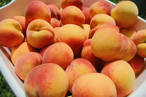 picking perfect peaches!