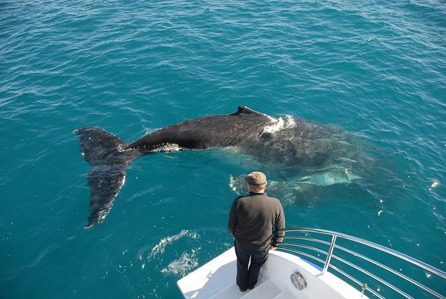 Fraser Island Dolphin Feeding