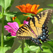 I'm back - with colors from my garden! by Vicki's Nature