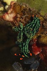 Tulamben muck diving