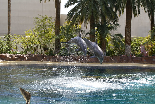 Siegfried Roy 39 S Secret Garden And Dolphin Habitat Flickr Photo Sharing