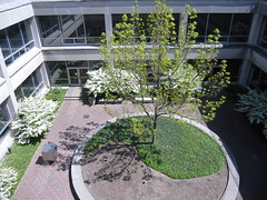 Sunny spring courtyard will return soon.