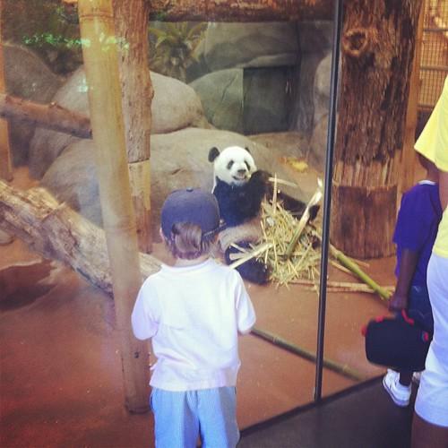 Visiting the pandas