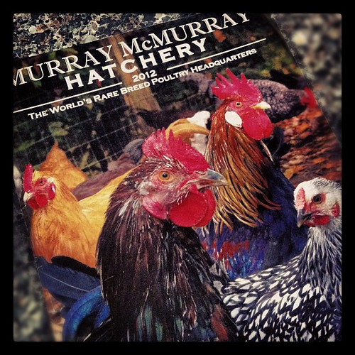 Squeal! The chicken catalog is here!