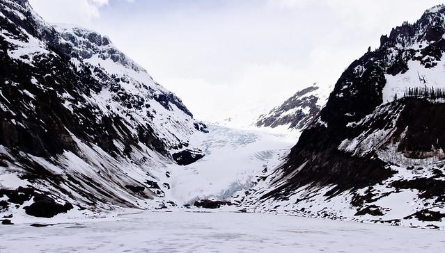 Panorama: Bear Glacier