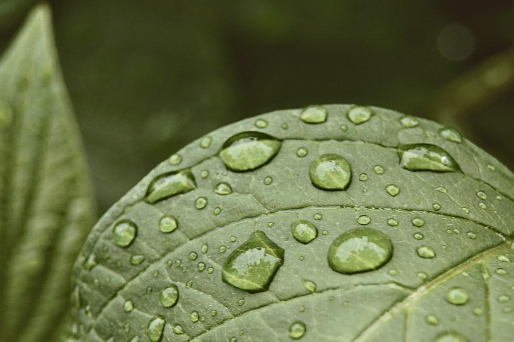 raindrops6