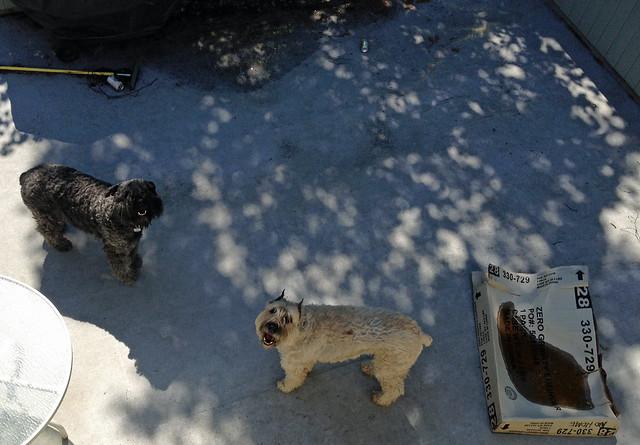 Observatory Dogs