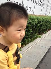 朝散歩とらちゃん (2012/6/11)