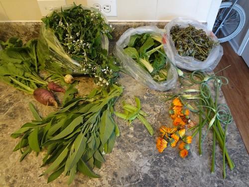 2012.06_a recent garden harvest