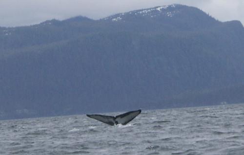 Whale- Juneau 2709 cu