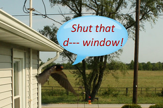 Shut that d--- window