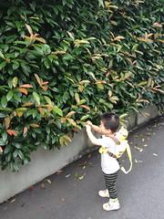 朝散歩 (2012/7/3)