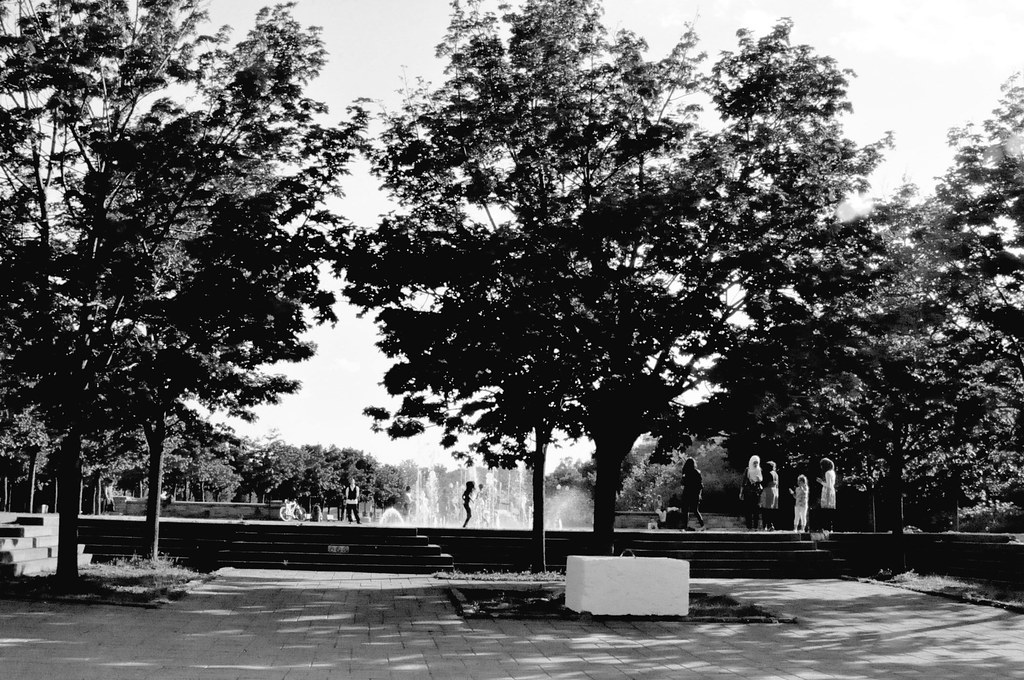 arbres-BW-jean-drapeau