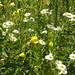 Blumen am Klingnauer Stausee