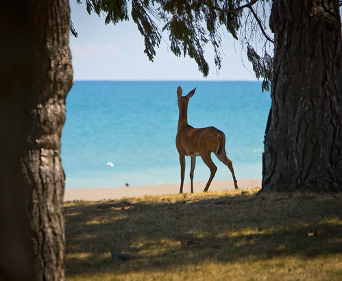 Deer on the Beach by Ricky L. Jones Photography
