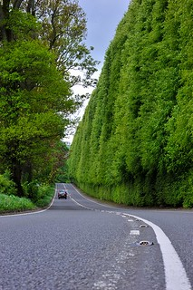 World's largest hedge (beech) in Perthshire