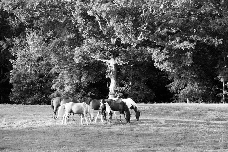Horses_May192012_0040BW
