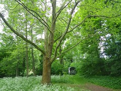 woodland, branch, leaf, tree, grove, green, forest, biome, temperate broadleaf and mixed forest,