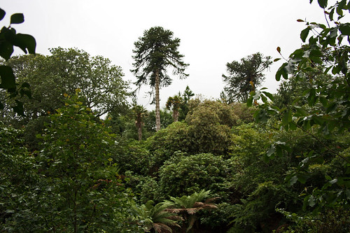 The lost garden of Heligan