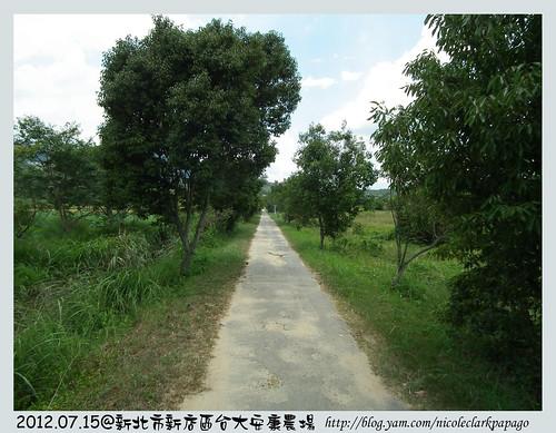 新店台大農場6